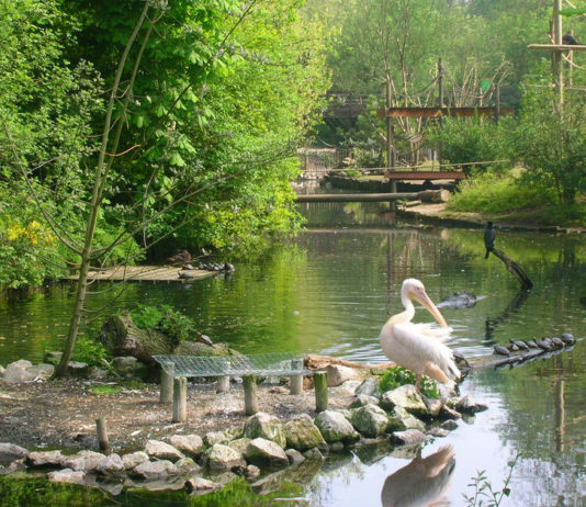Depuis le 8 mai 2017, le zoo de Lille est devenu payant pour une partie des habitants de la MEL. La fréquentation mensuelle moyenne a chuté de 58% sur un an. Photo: Creative commons/elchicogris.