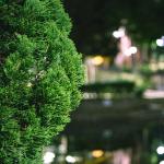 2020-09-nantes-promesse-phare-arbre