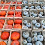 Nantes Paysages Nourriciers_recolte legumes automne Stephan Menoret2