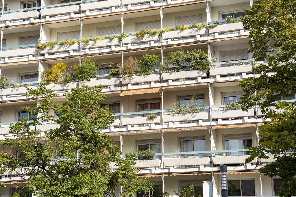 Végétalisation des façades privées